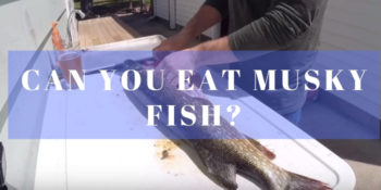 Can you eat musky fish