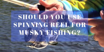 Should You Use Spinning Reel For Musky Fishing